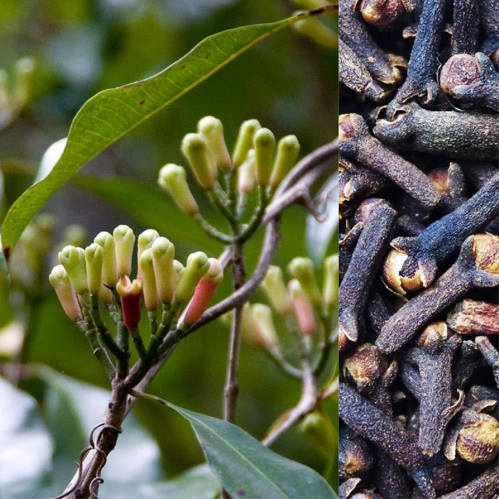 Clove Plant In Bangladesh - GETSVIEW Market