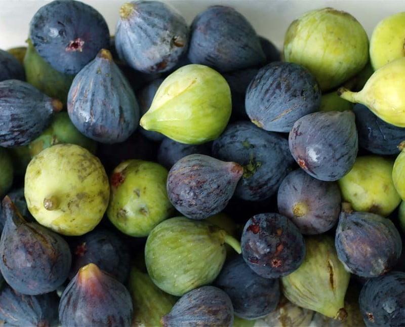 Lebanese Fig
