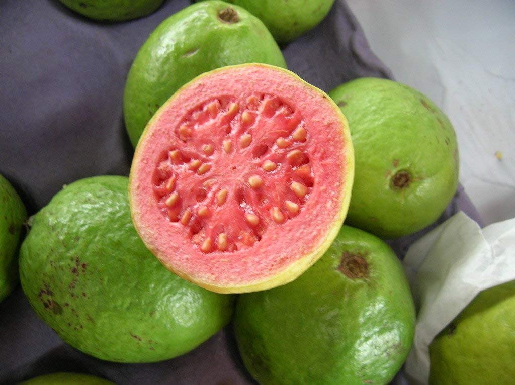Red poly guava