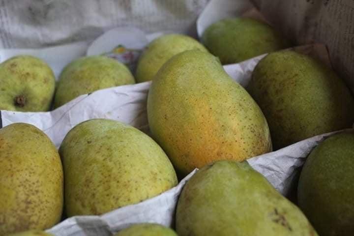 Chapai nawabganj Best Himsagar Mango For Sell