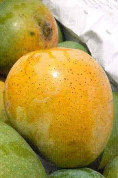 Fresh Himsagar Mango BD