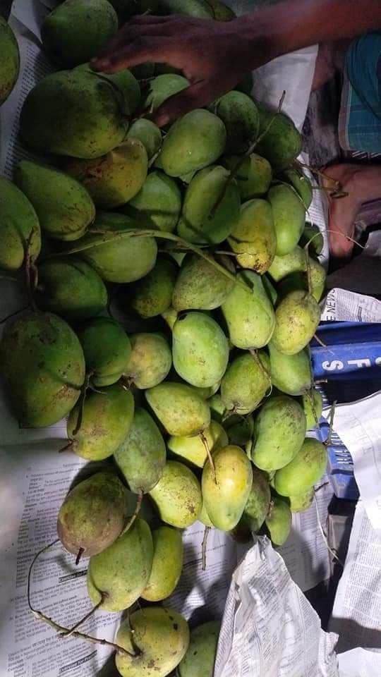 Himsagar Mango BD